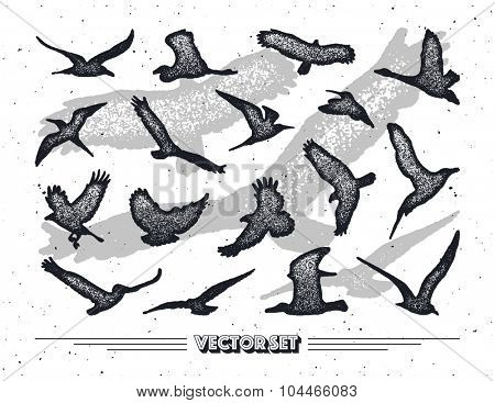 Set of birds silhouettes - flying.Vector illustration.