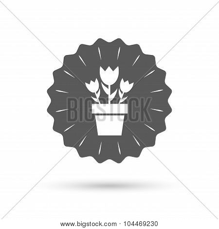Flowers in pot sign icon. Bouquet of roses.