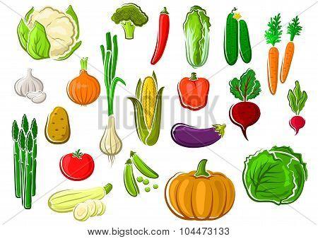 Healthy fresh ripe isolated farm vegetables