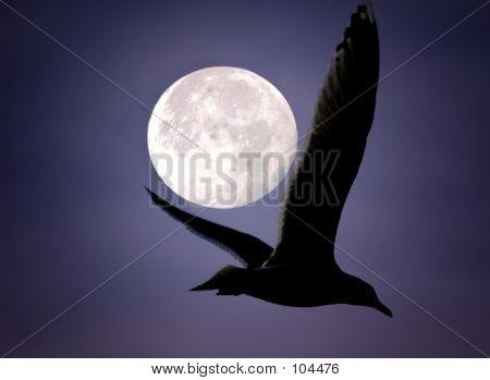 Moonlght Shadow