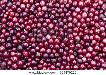 Red Lingonberry Background