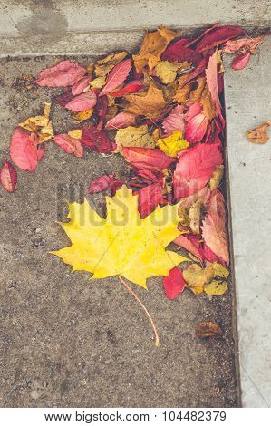 Fallen Colorful Autumn Leaves Near Step Of Concrete Staircase