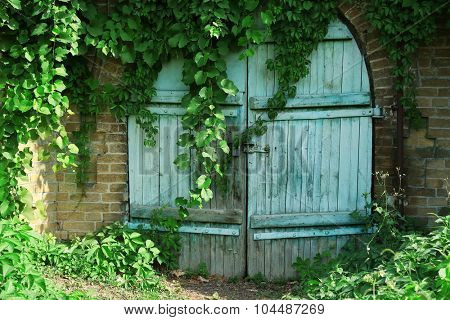 Old wooden door with rusty hinges of the antique stone house overgrown with grape leaves.