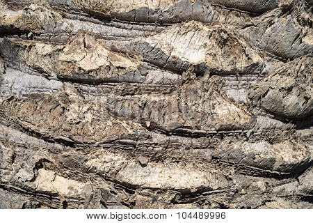 Abstract Texture Of A Palm Trunk Closeup