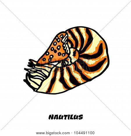 Isolated colorful Nautilus on a white background. Vector illustration