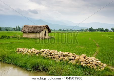 Small house surrounded by rice paddy fields in Deukhuri valley, Nepal