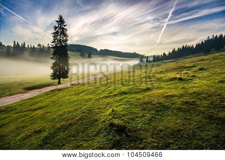 Fir Tree In Fog By The Road  In Mountains At Sunrise