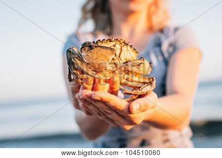Live Crab In Female Hands