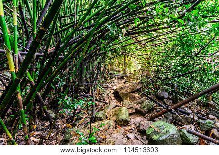 Nature Trail Bamboo Forest In National Park, Saraburi Thailand.