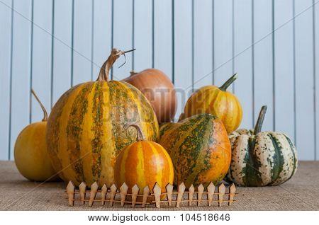 Set of different pumpkins. Harvest Pumpkin and fence on white wooden backgrond