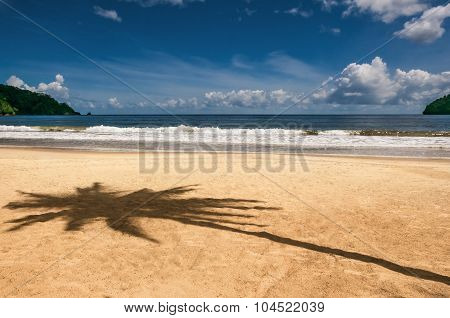 Maracas bay Trinidad and Tobago beach palm tree shadow sharp