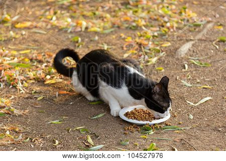 Black And White Cat Eats