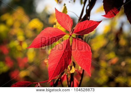 Nice abstract red autumn leafs