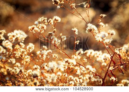 Nice autumn flower meadow