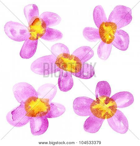 Pink - yellow watercolor flowers isolated over the white background