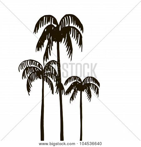 rain forest, palm tree silhouettes