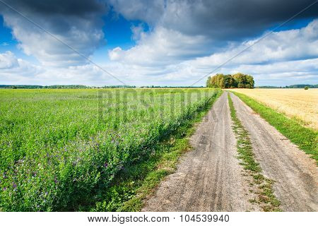 country path between fields