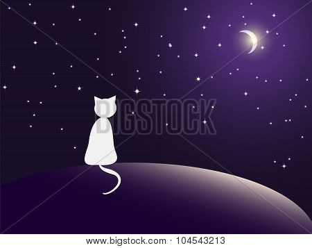 Lonely cat watching stars