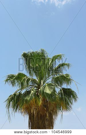 Palm Tree Against Blue Sky. Tropical Nature