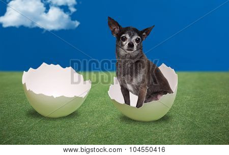 Dog seating inside a cracked egg