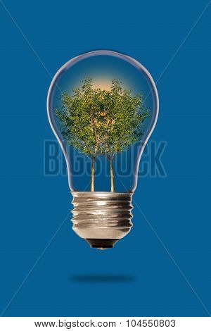 Trees inside a light bulb