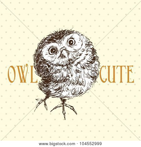 Cute Owl Standing And Looking