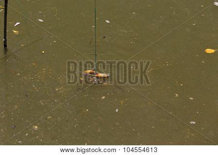 Crab Caught