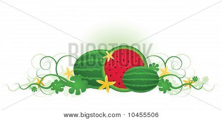 Three Watermelons