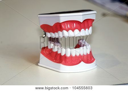 Teeth Anatomical Model As A Background