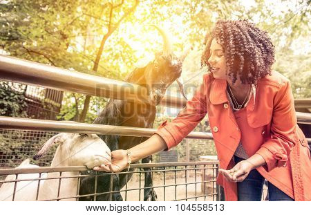 Young Woman Feeding Animals At The Zoo.
