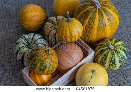 Many of mini pumpkin in wooden crate on white background