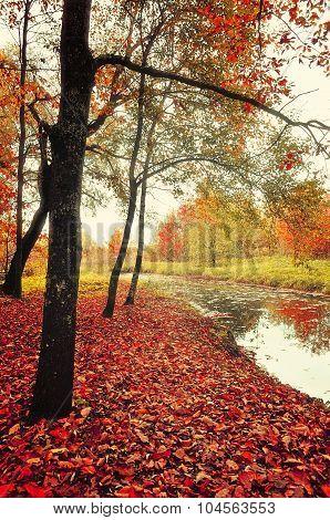 Stunning Autumn Landscape In Vintage Tones