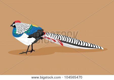Pheasant. Vector Illustration