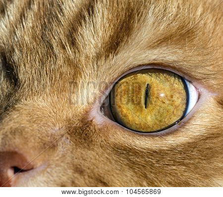 Close up image of cat's eye