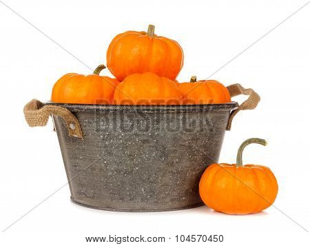 Tin harvest pail with autumn pumpkins over white