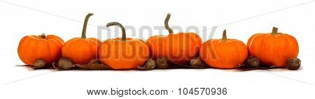 Border of pumpkins with leaves and nuts isolated on white