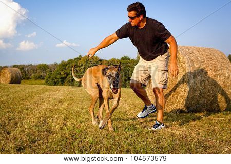 Man with his great Dane in field