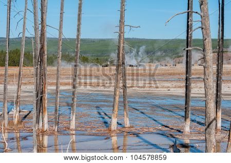 Thermal Basin Of Yellowstone