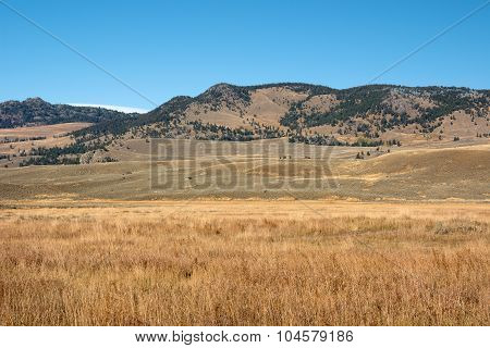 Lamar Valley Scenery