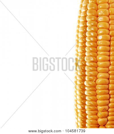yellow ear of corn isolated on a white background