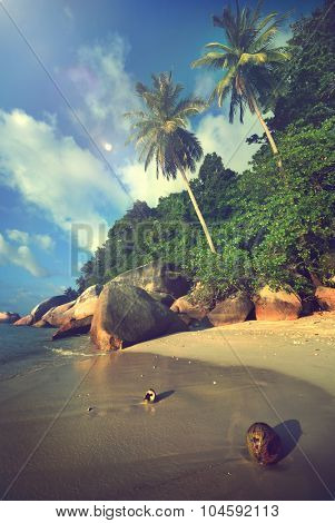 Malaysian Beach Island Vacation Summer Tropical Tree Concept