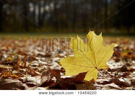 Autumn In Park (leaf 1)