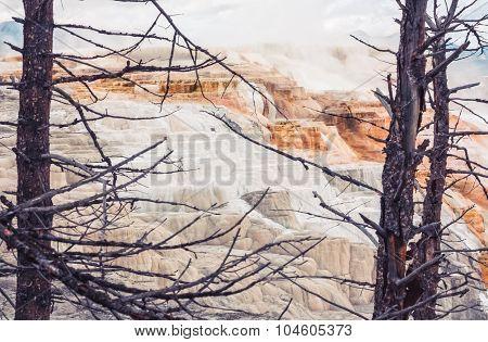 Tree Framed Canary Springs