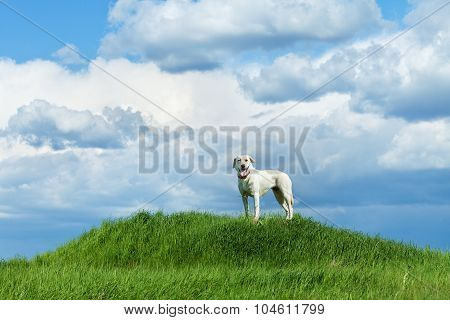 Dog Standing On A Hill