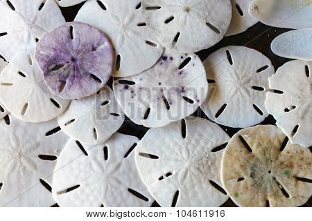 Stack of sand dollars background