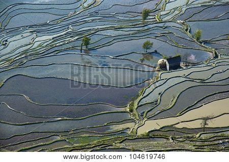Flooded rice fields in South China