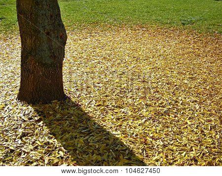 Fallen Leaves Under The Tree