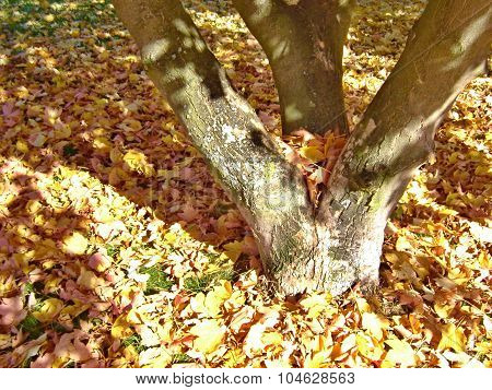 Dry Leaves Under The Tree