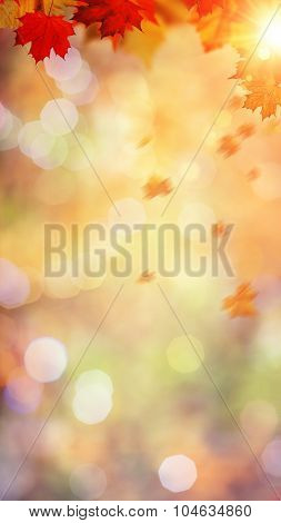 Autumnal fall in the forest abstract environmental backgrounds