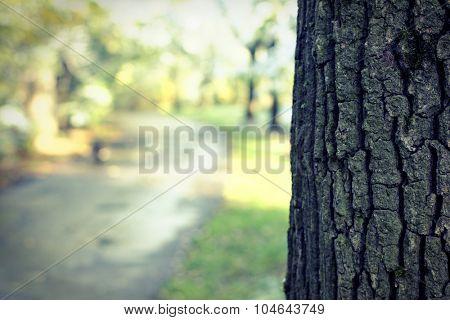 Trunk tree and defocused park shot
